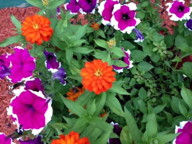 momsflowers